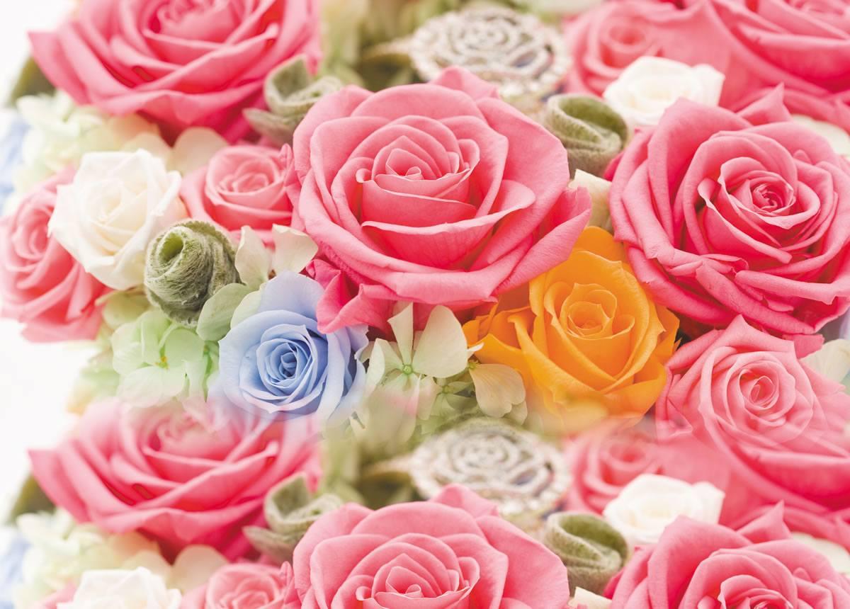 women's day - Roses