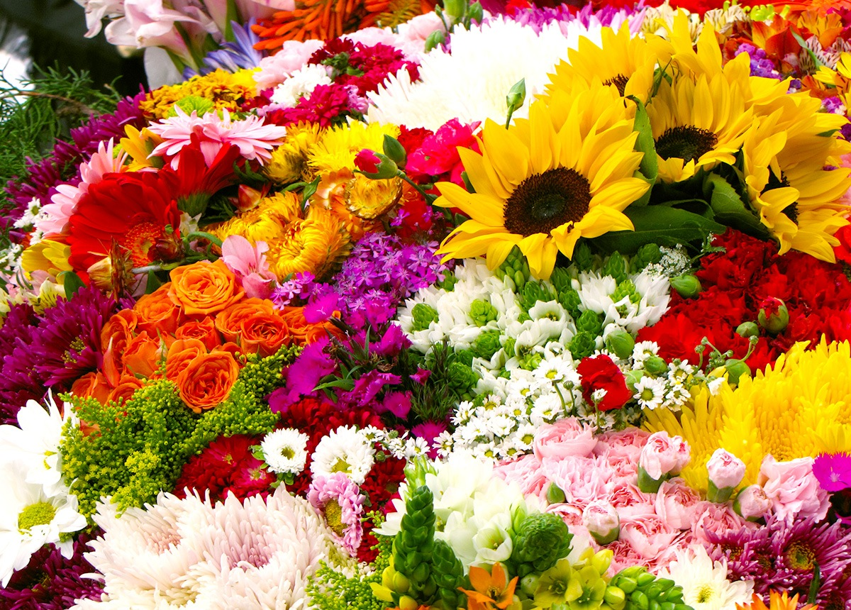 Colombia is the world's second largest flower exporting country.